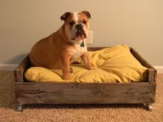 Step-by-step instructions on how to build a pallet pet bed. For someday when she doesn't need her kennel anymore.
