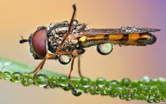 Pakan_insectos_magnificados_03