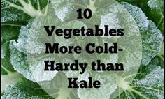 If you think winter gardening involves months of eating kale, think again. A wide variety of garden vegetables tolerate freezing just as well as, and some even better than, most kale varieties. On ...