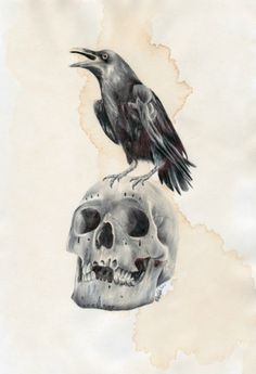 Raven standing on a skull. Drawn with ballpoint pens on coffee stained paper. A4 size. By Paul Alexander Thornton.    http://www.facebook.com/PaulAlexThornton