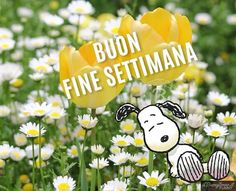 ❤️Buon Fine Settimana❤️ Italian Lessons, Italian Language, Peanuts, Funny, Text Posts, Teaching Resources, Funny Parenting, Hilarious