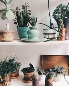#cactus #pots #succulents #plants #greenery #homedecor #lifestyle