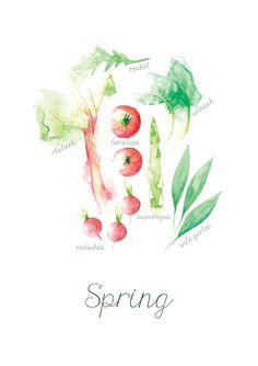 DER FRÜHLING IN OBST UND GEMÜSE |Englisch  Eine wunderschöne Illustration von saisonalem Obst und Gemüse im Frühling. Ein schönes Geschenk für alle Liebhaber der saisonalen Produkte, ideal für die Küche!