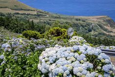 "São Miguel in the Azores is often called ""the green island"" because of the flora that covers it. Get some tips for what to see and do on São Miguel. Highlights, Maine, Portugal, Flora, Island, Plants, Tips, St Michael, Europe"