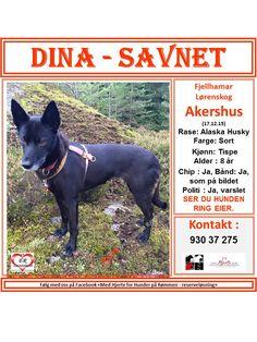 SAVNET : Nedre Grønlivn Fjellhamar, Lørenskog Akershus (18.12.15. . NAVN : Dina . . RASE : Alaska Husky. . FARGE : Sort. . KJØNN : Tispe. . ALDER : 8 år. . CHIP : Ja. . BÅND : Ja, som vist på bildet. halsbånd, sele + refleks. . POLITI/FALCK/VIKING : Ja. . ' KONTAKT : 930 37 275 . .  HJERTEkontakt : Nina 470 69 414 / Anne B 920 20 142. .