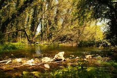 Macedonia - Ohrid - Ercument ARI - Picasa ウェブ アルバム
