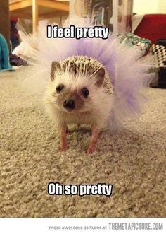 a very pretty hedgehog :)