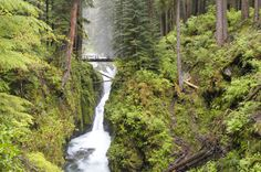 Olympic National Park is one of the most visited National Parks, with almost a million acres to hike.