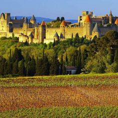 Take a grape break to #Carcassonne #Languedoc