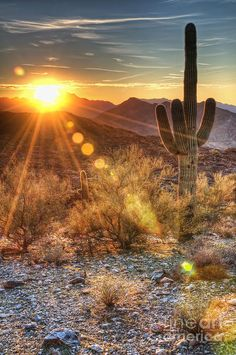 ✮ Desert Sunset - Phoenix, AZ ~ We have witnessed this for almost a year now.....Beautiful!
