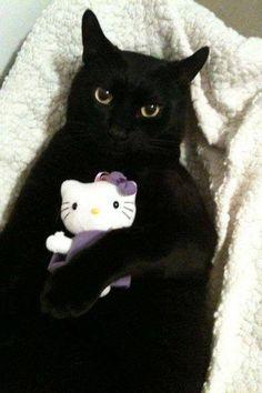 nice toy kitty