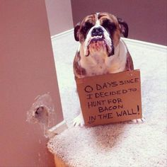 """0 days since I decided to hunt for bacon in the wall.""  This seems legitimate.  I don't understand the need for a shame sign.  I often hide bacon in the wall..."