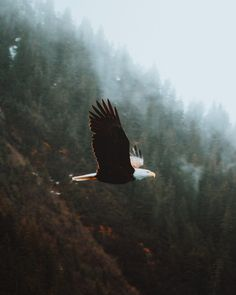We waited a good long while to watch the eagle leave its nest. My first attempt at bird photography and man, patience sure is key. Nature Music, Nature Pictures, Bellisima, Bald Eagle, Paradise, Planets, Wildlife, Photo And Video, Animals