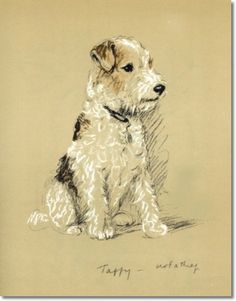 wire haired fox terrier graphics | Lucy Dawson Taffy Wire-Haired Fox Terrier I am not a Thief - Dog ...