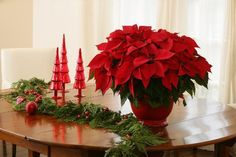 How to care for your favorite holiday plants - The Grumpy Gardner