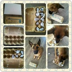 Easy ame for dogs. Eggs package