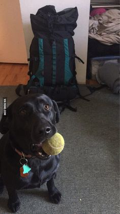 The hardest part about leaving for a 2 week backpacking trip... - 9GAG