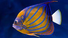 pesci tropicali -
