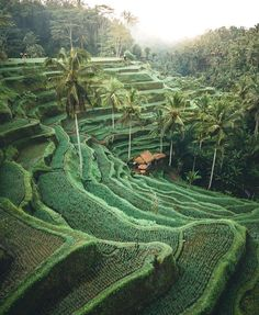 Rice fields in Bali, Indonesia. – Rice fields in Bali, Indonesia. – Rice fields in Bali, Indonesia. – Rice fields in Bali, Indonesia. Ubud, Bali Travel Guide, Asia Travel, Beach Travel, Summer Travel, Places To Travel, Travel Destinations, Places To Visit, Travel Things