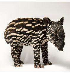 6 day old Malaysian Tapir