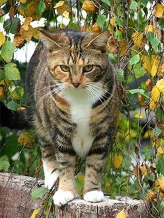 You're Leafpool   Which Warriors Cat Character are you? (Girls Only) - Quiz