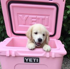 Ohh, just a puppy in a Yeti to start your day! Pink and puppies...love, love, love. ♡♡♡
