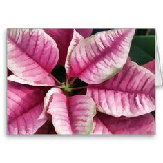 Pink Poinsettia Christmas Card