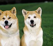 15 Worst Dog Breeds for New Pet Owners