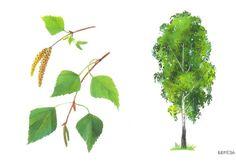drzewo 12
