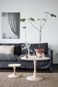 plant on the sofa table...