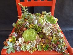 Old chair planter design idea - rustic stuff - Garden Chair Succulents In Containers, Cacti And Succulents, Planting Succulents, Planting Flowers, Container Flowers, Container Plants, Smith Gardens, Chair Planter, Gardening