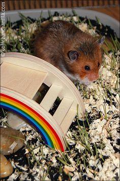 rainbow bridge for hamster enclosure