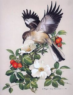 Mockingbird illustration | Tattoo Idea....... Instead of all the flowers n leaves... Carrying a baby/pink n blue ribbon-miscarriage n innocence