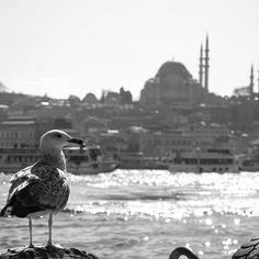 Karaköyden Süleymaniye'ye.. İstanbul.. 2011 #istanbul #siyahbeyaz #blackandwhite #bnw_turkey #instabnw #bnw_photooftheday #bwphoto #bnw_life_shots #bw_istanbul #turkobjektif_bw #TFLers #TagsForLikes #objektifimden  #photographers_tr #blackandwhitephotography #blackandwhitephotographyoftheday #bw_photooftheday #aniyakala #hayatakarken #fotografheryerde #amateurs_bnw #erdinçaltun #anlatistanbul #kadrajturkiye #bnw #bnw_life #bnw_photography #bnw_capture #bnw_of_our_world #bnwmood