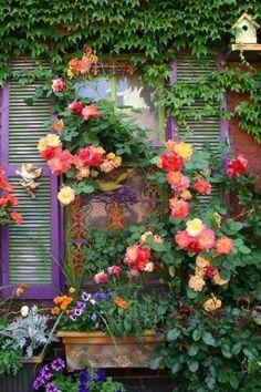 Climbing roses… so many shades. This might be Josephs' Coat Rose.