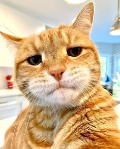 Boss Cat just came home after closing some deals. - your daily dose of funny cats - cute kittens - pet memes - pets in clothes - kitty breeds - sweet animal pictures - perfect photos for cat moms I Love Cats, Cute Cats, Funny Cats, Funny Animals, Cute Animals, Cat Selfie, Gatos Cat, Cats Diy, Animals Images