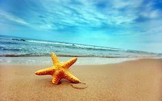 wallpapernarium: Bonita y colorida estrella de mar enterrada en la arena de la playa