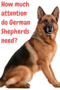 If your German Shepherd digs a lot then you might be wondering why and what you can do about it. This post will show you why and what you can do about your German Shepherd digging a lot. German Sheperd Dogs, German Shepherd Facts, Long Haired German Shepherd, German Shepherd Training, German Shepherds, Shepherd Dogs, Teach Dog Tricks, Dog Clothes Patterns, Dog Hacks