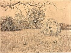 Vincent van Gogh: Field of Grass with a Round Clipped Shrub  Arles: early May, 1888 (Amsterdam, Van Gogh Museum)