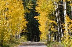 grand mesa colorado pictures - Google Search