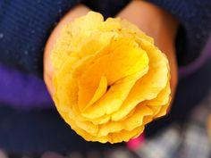 イチョウの花束の画像(写真) a flower made of gingko biloba leaves
