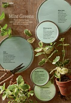 "Mint Green Paint Colors - On-trend, but completely livable, take a cue from these mint green paint colors to soothe any room. ""Mint greens are happy colors that work in a lot of different climates,"" designer Paige Sumblin Schnell says, as long as the room Mint Green Paints, Green Paint Colors, Wall Colors, House Colors, Hallway Colors, Vintage Paint Colors, Soothing Paint Colors, Nursery Paint Colors, Color Combos"