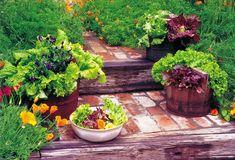 Growing a Fall Vegetable Garden | thegardengeeks