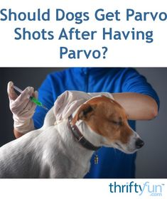 5 Myths Uncovered About Parvo And Your Dog Parvo Everything You Need To Know Dogs Animals