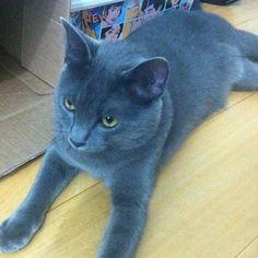 """""""Lindoooooo apronta e depois se joga no chão #korat #cat"""