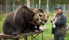 The Bearman Sulo Karjalainen. At the Predator Center in Kuusamo, one can get acquainted with some of the large predators that are found in Finland. - Kuusamon Suurpetokeskus