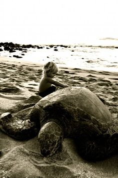 Playing w/ turtle at the seaside