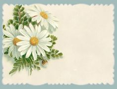 Spring daisy notecard ~ plain version.