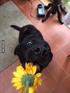 She really likes flowers