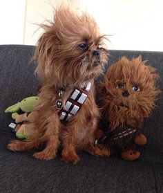 In a galaxy far, far, away... #chewie #the #dog